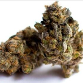 Canberra weed for sale Online